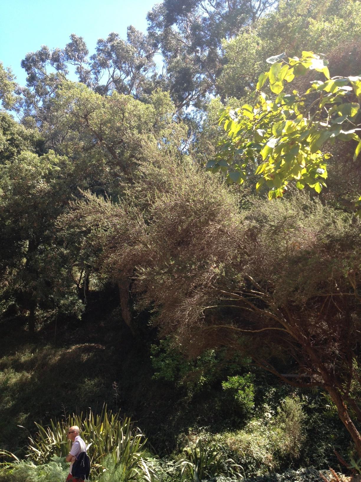 Sous le charme le jardin m diterran en du rayol canadel for Jardin rayol canadel