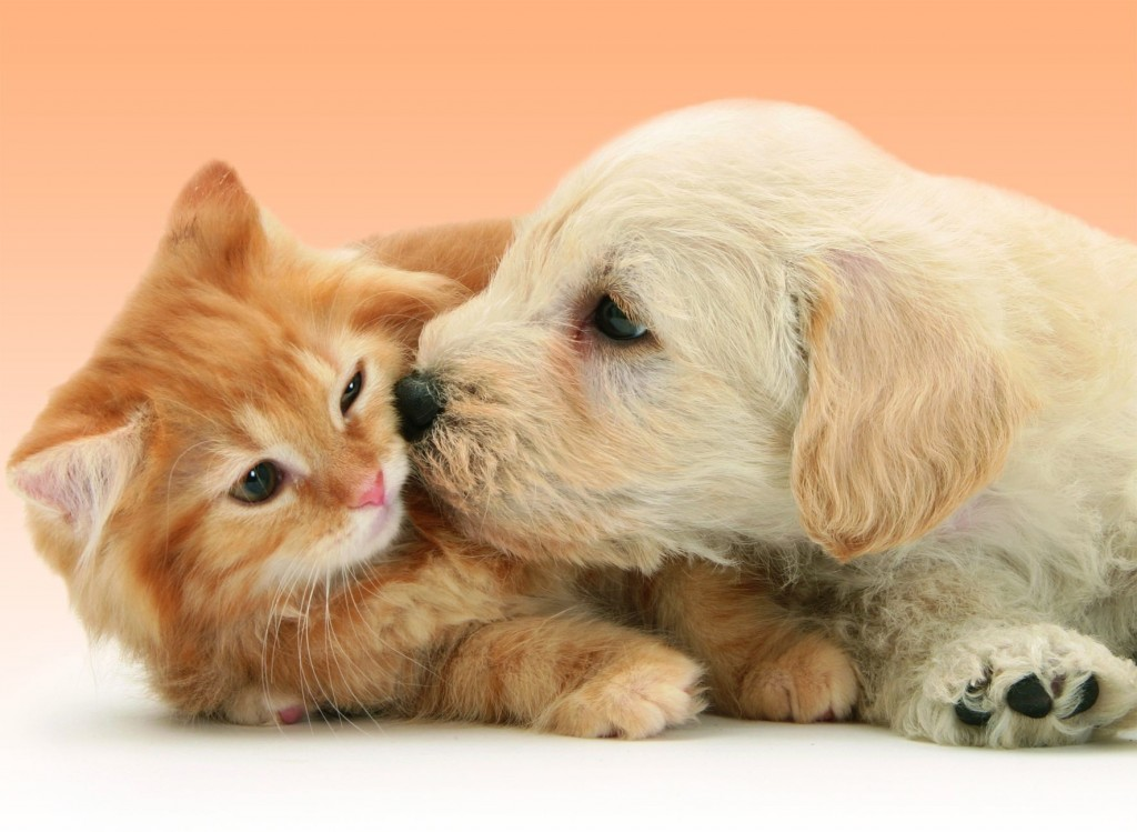 puzzle-chat-chien_.jpufrrav-141722